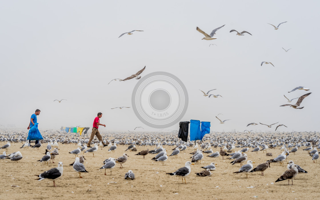 """Seagulls and mist hang out on the beach"" stock image"