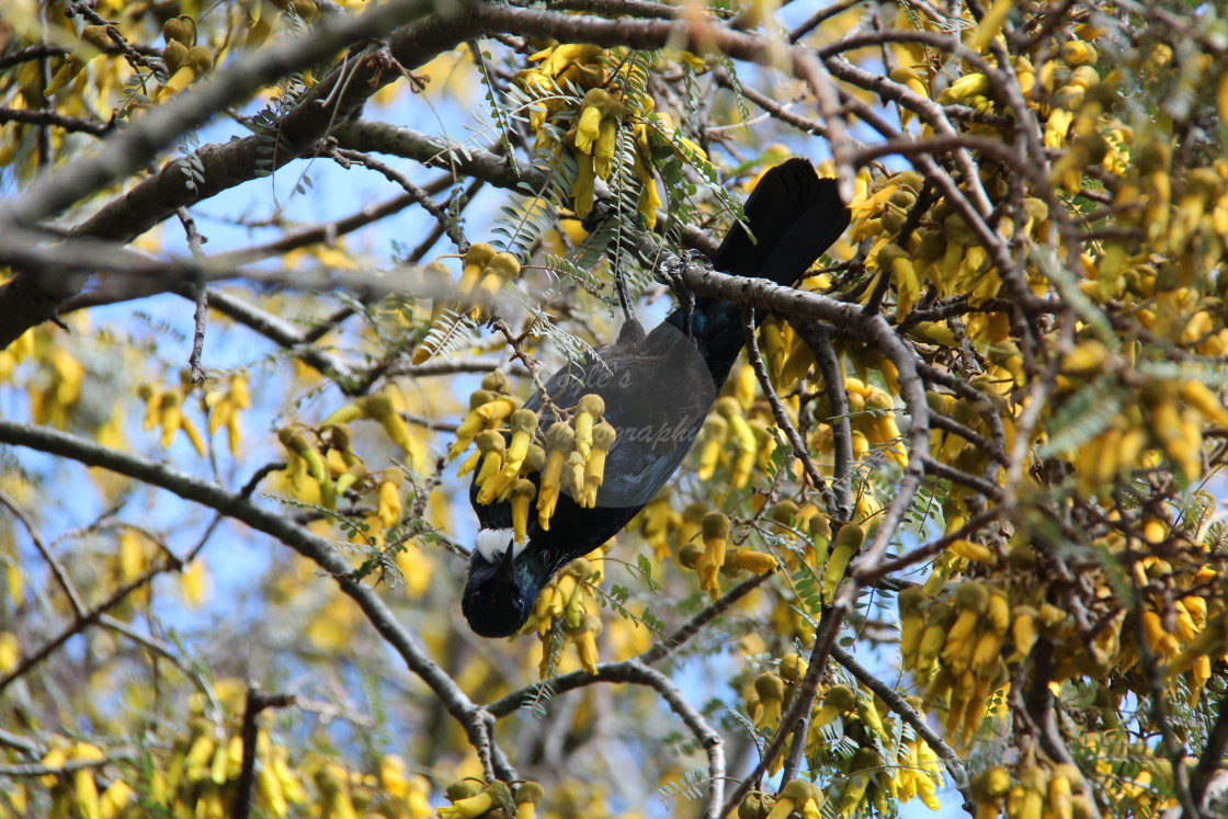 """""""Tui Hanging Out"""" stock image"""