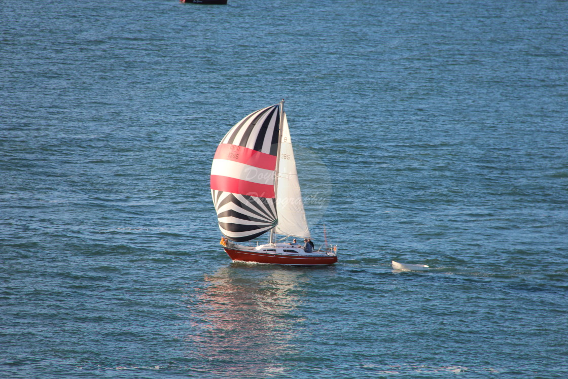 """""""Sailing Auckland Harbour"""" stock image"""