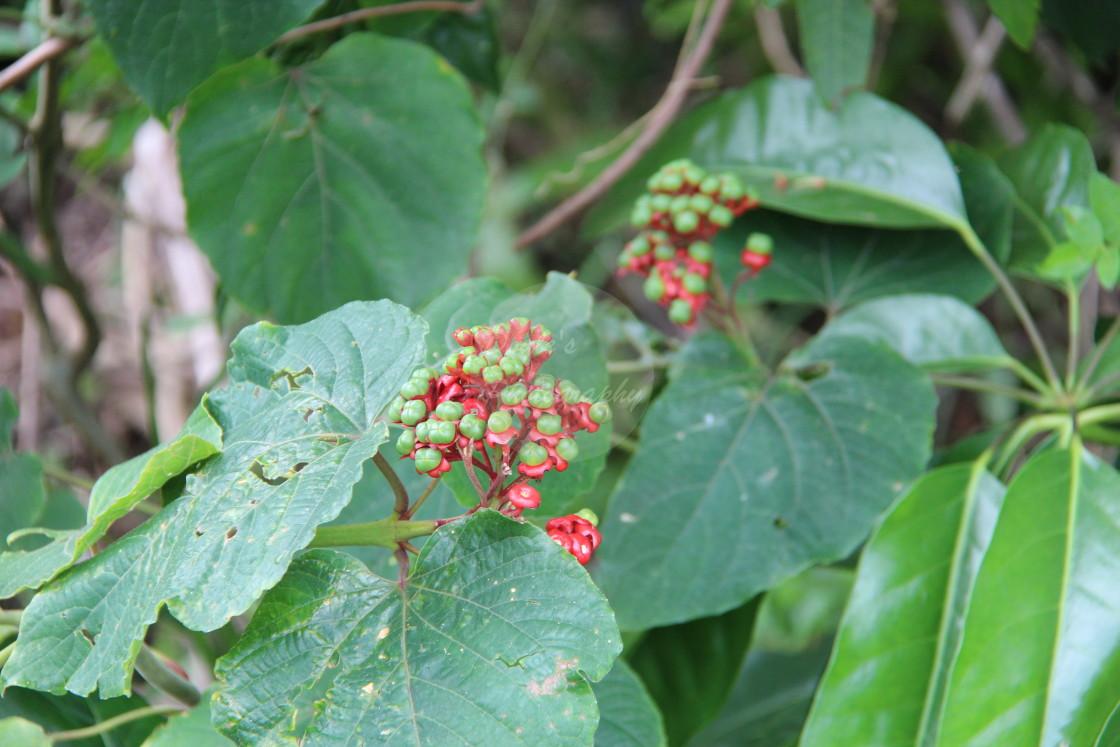 """Small Berries"" stock image"