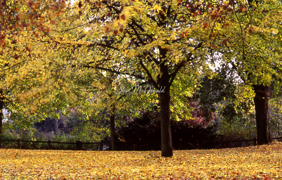 """""""Autumn Leaves in Berlin"""" stock image"""