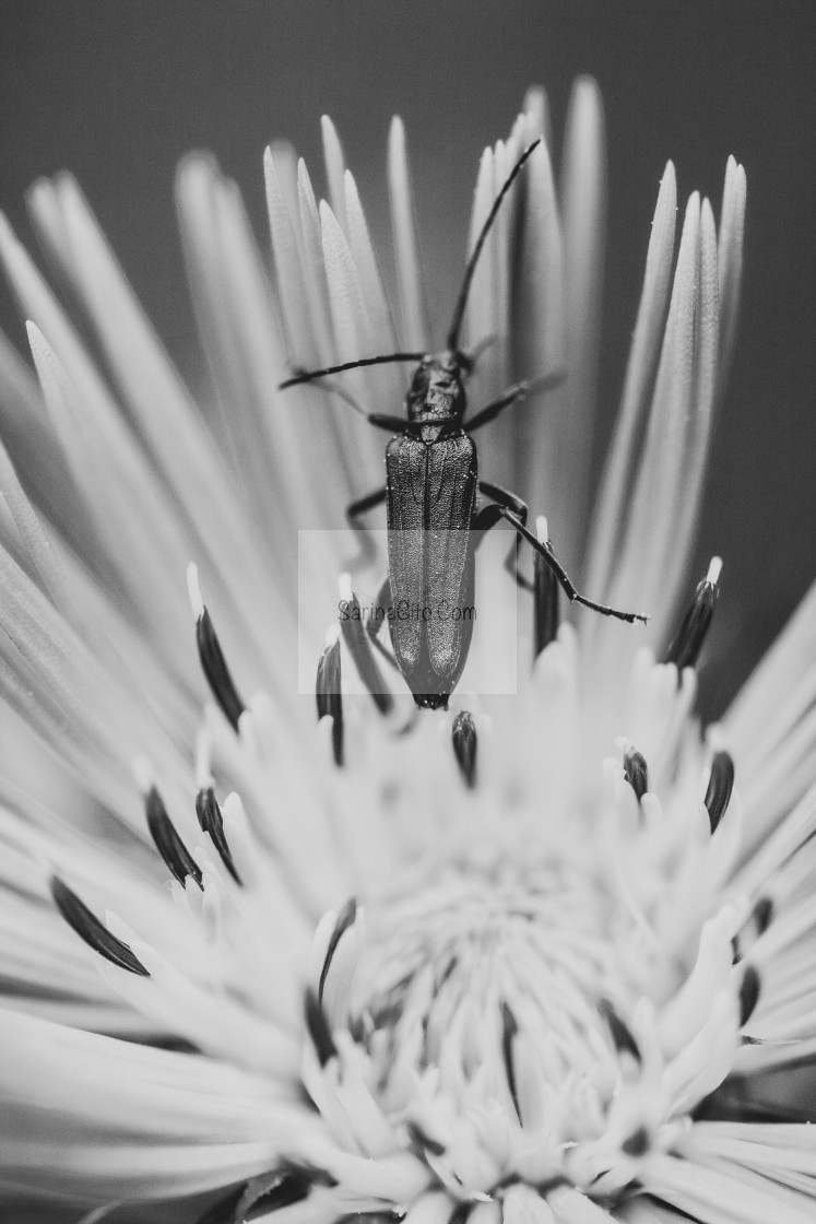 """Bug on a Flower"" stock image"