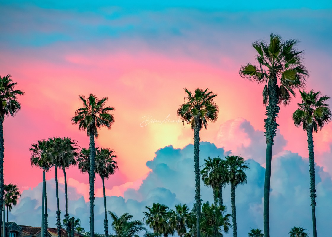 """""""Palm Trees and sorbet"""" stock image"""
