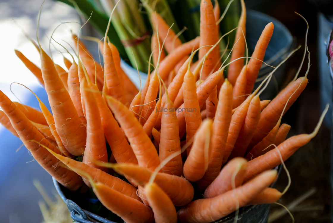 """""""Colorful Carrots"""" stock image"""