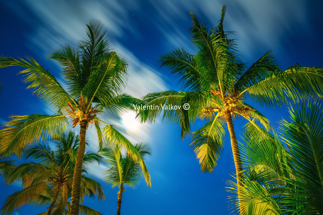 """""""Coconut palm trees perspective view at night"""" stock image"""