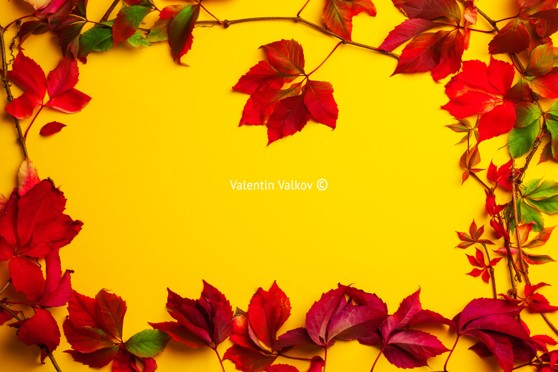 """Autumn seasonal leaves with border frame and space for text, fal"" stock image"