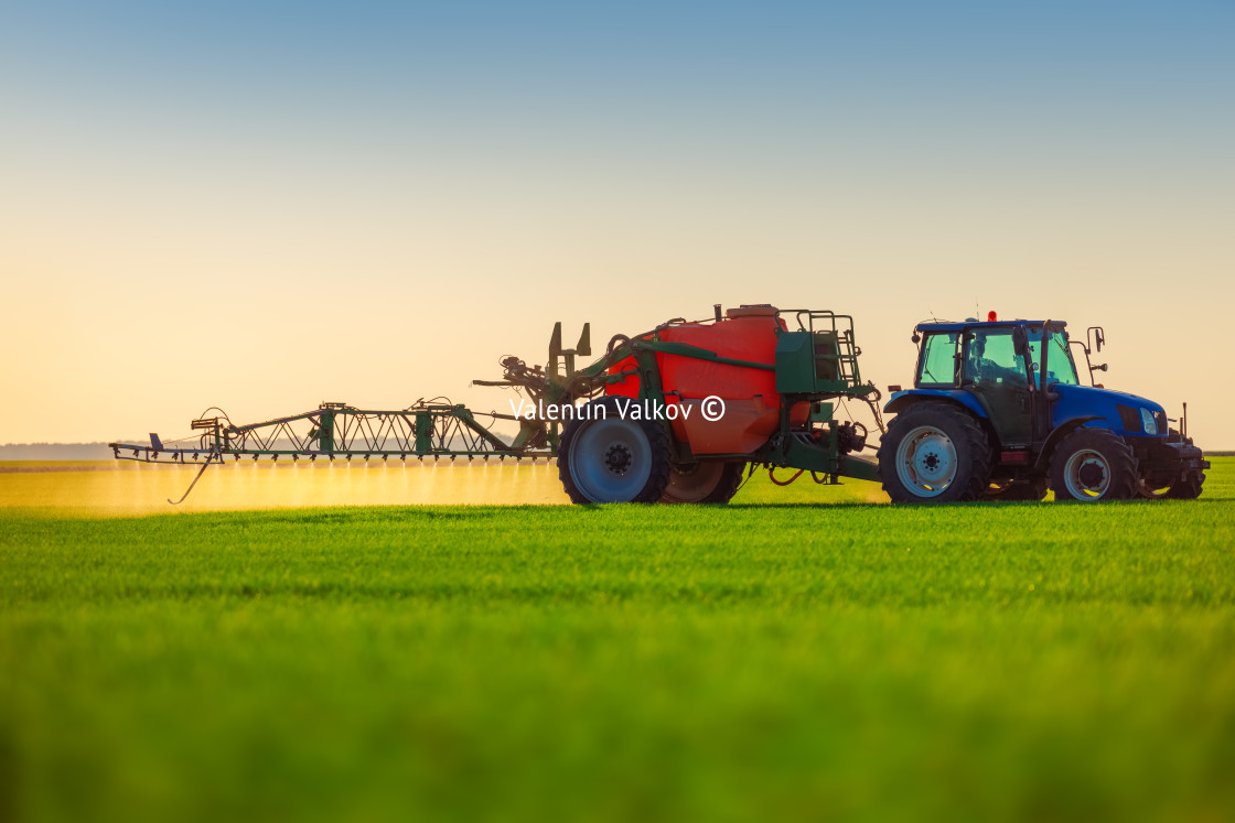 """Farmer in tractor fertilizing wheat field,hdr nature landscape"" stock image"