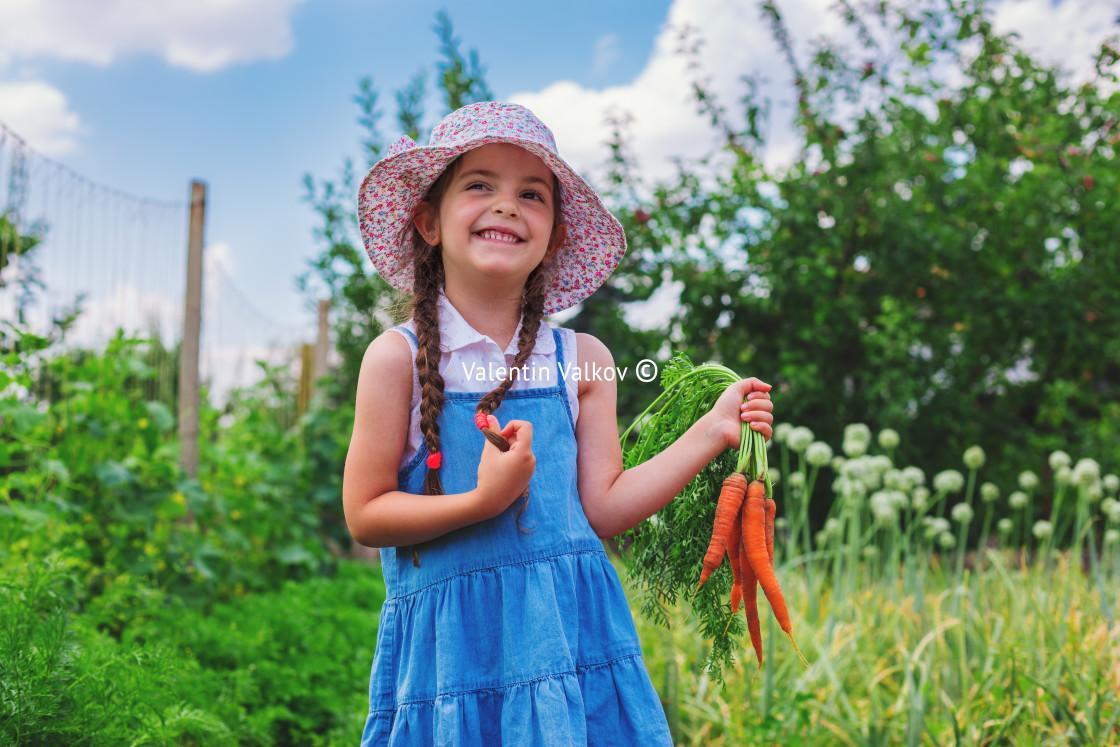 """Beautiful little child with carrots in garden. Girl farmer, hort"" stock image"