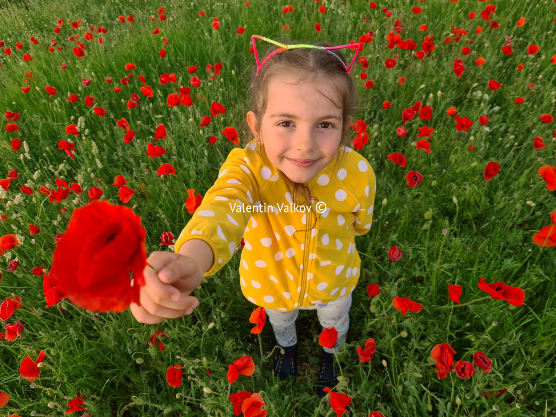"""Little girl in a field of wild flowers. Meadow with poppy plants"" stock image"