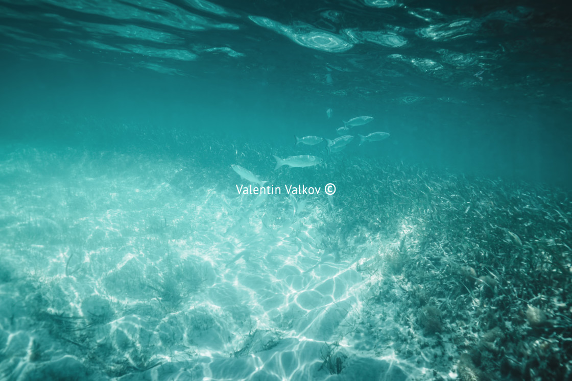 """""""Fish, Sea sand and blue water. Underwater ocean background"""" stock image"""