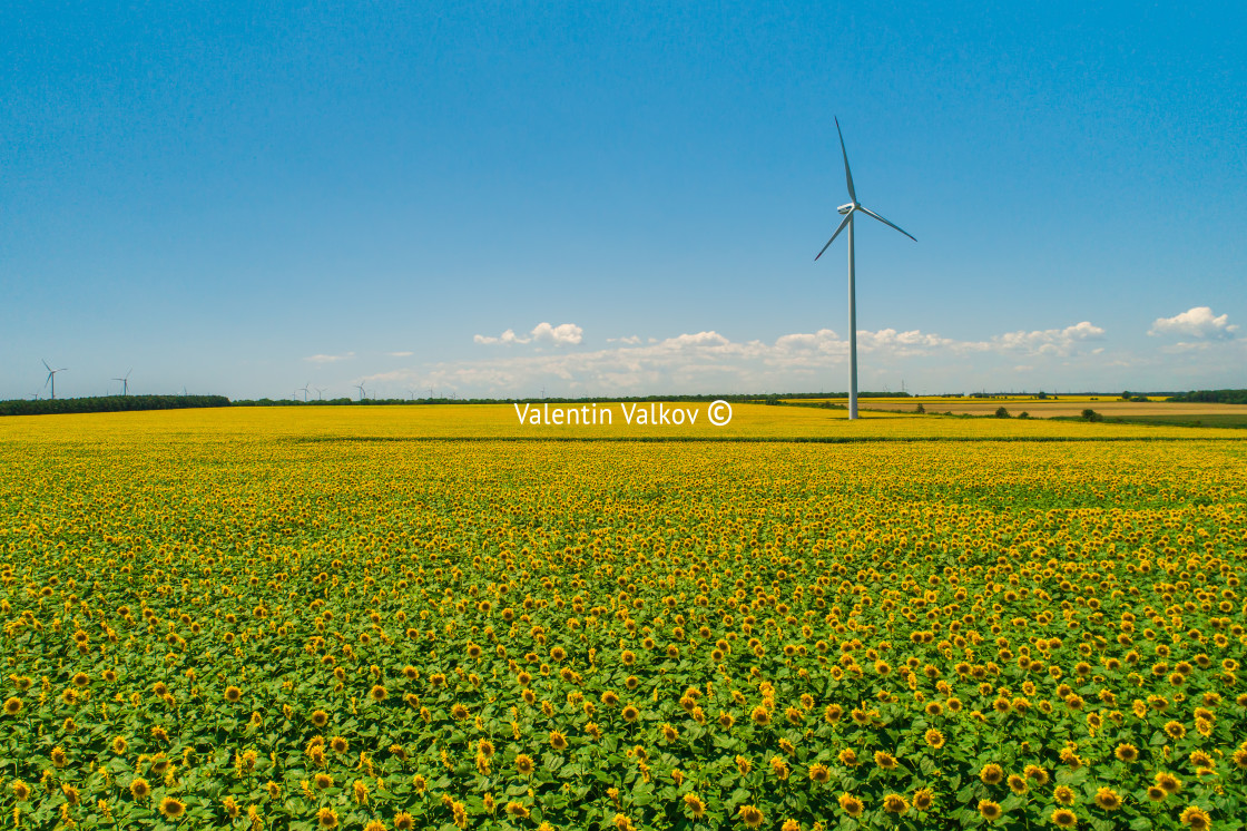 """""""Blue sky and wheat field with wind turbines generating electrici"""" stock image"""