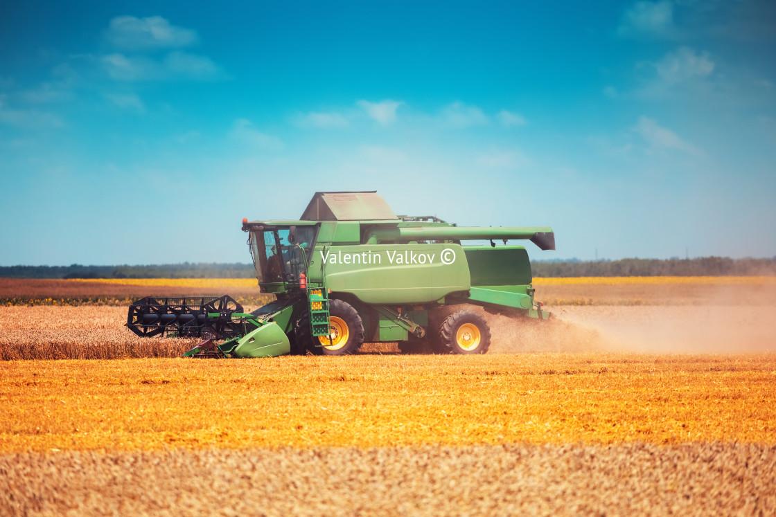 """Combine harvester agriculture machine harvesting golden ripe whe"" stock image"