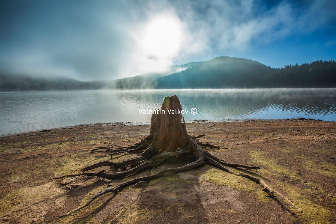 """Morning fog on the lake"" stock image"