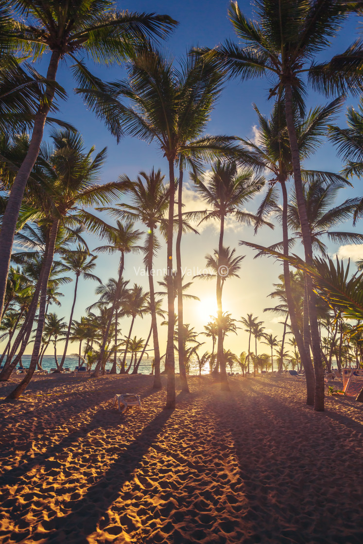 """Coconut palm trees perspective view"" stock image"