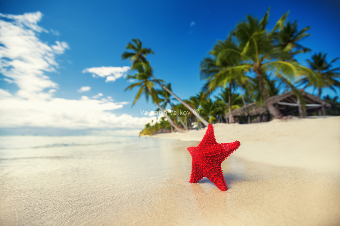 """Seastar or sea starfish standing on the island"" stock image"