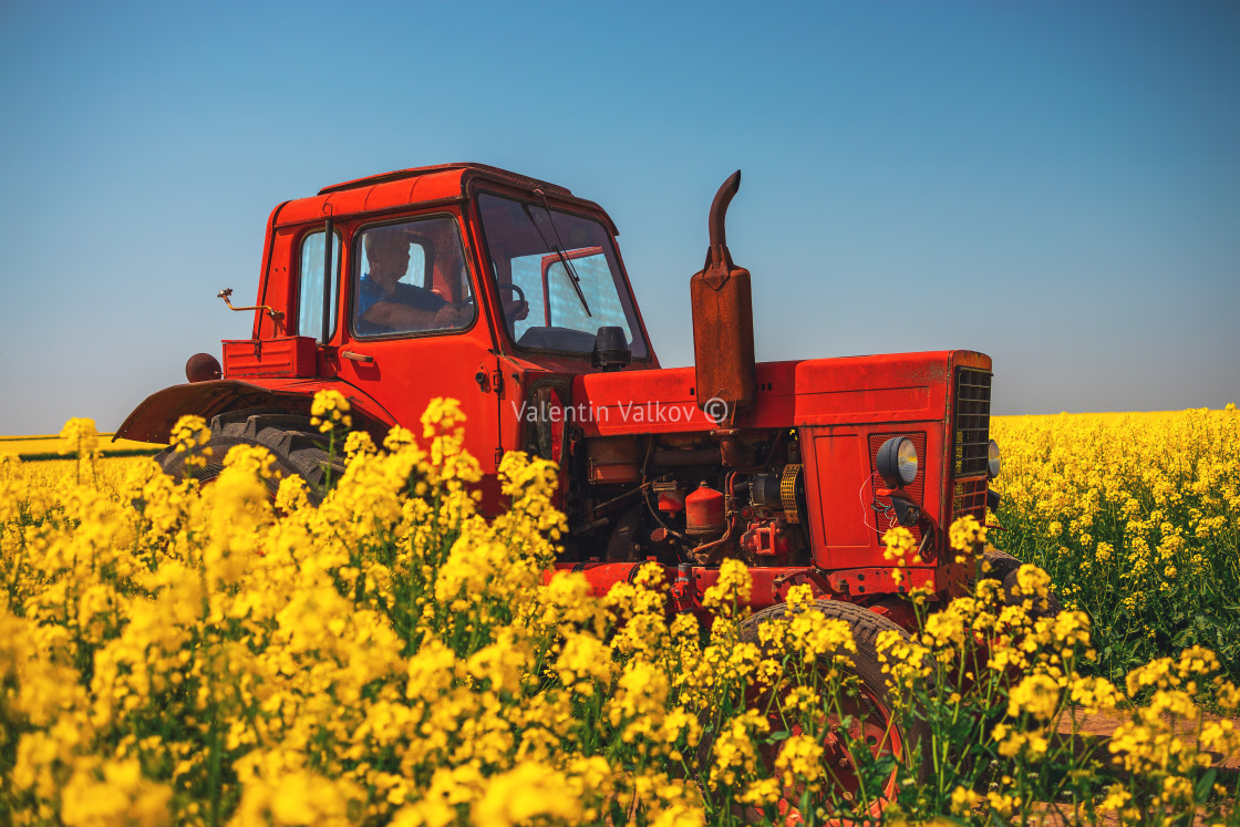 """""""Farm tractor in a rapeseed field and blue sky, beautiful spring"""" stock image"""