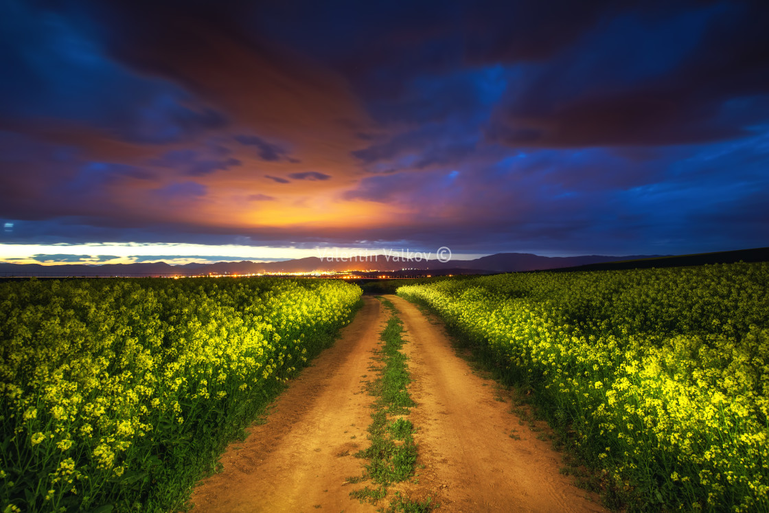 """""""Dramatic clouds over the rapeseed field, beautiful spring night."""" stock image"""