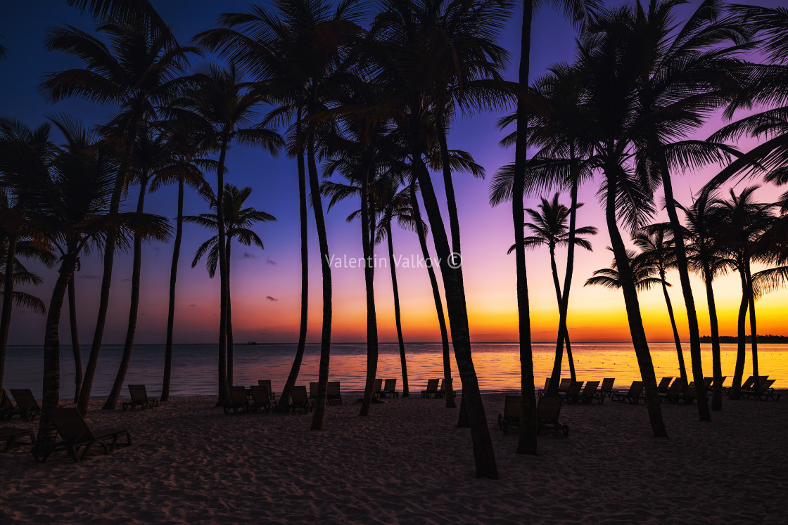 """Palm trees silhouette on sunrise tropical beach"" stock image"