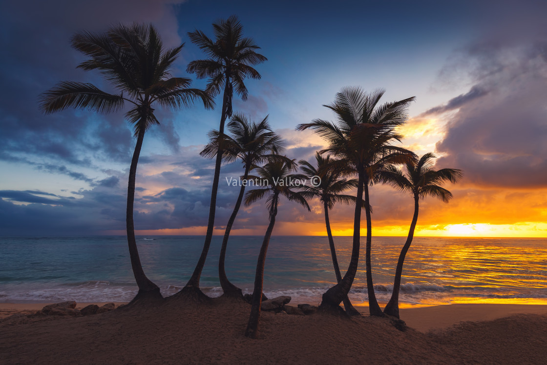 """Silhouettes of palm trees against the sky during a tropical sunr"" stock image"