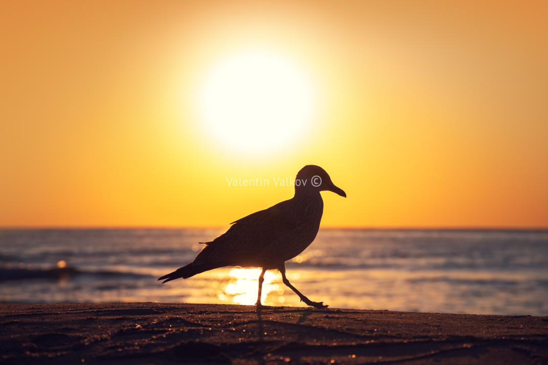 """""""Seagull on the beach sand against the sea"""" stock image"""