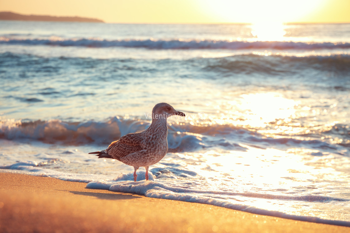 """Seagull on the beach sand against the sea"" stock image"