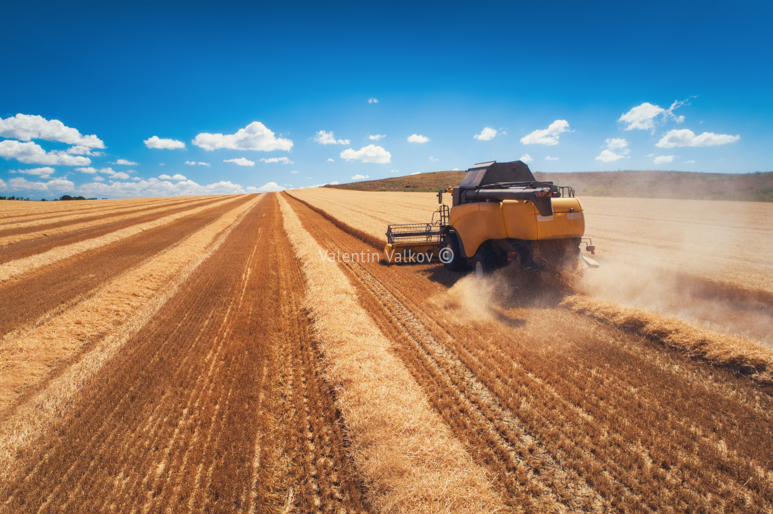 """Combine harvester agriculture machine harvesting golden ripe wheat field"" stock image"