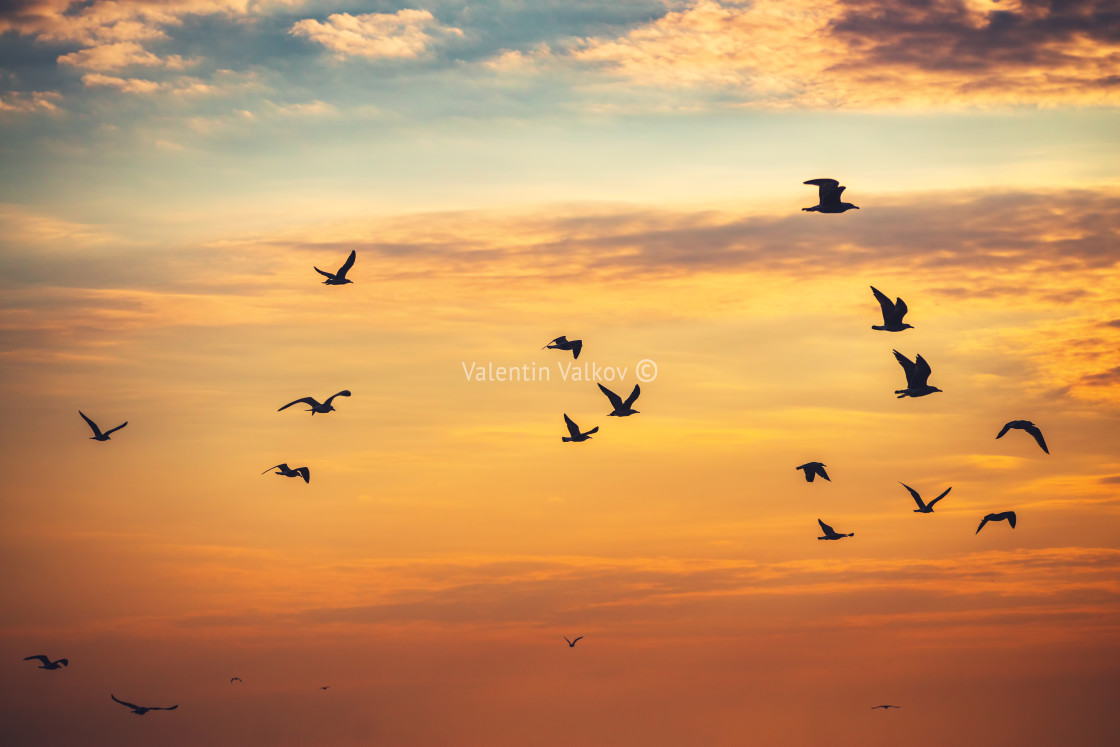 """Flying seagulls over the sea"" stock image"