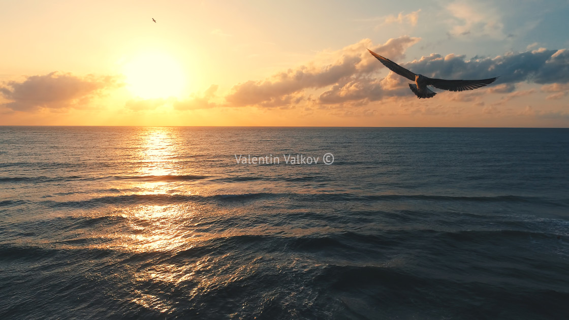 """Seagull over the sea - aerial view seascape"" stock image"