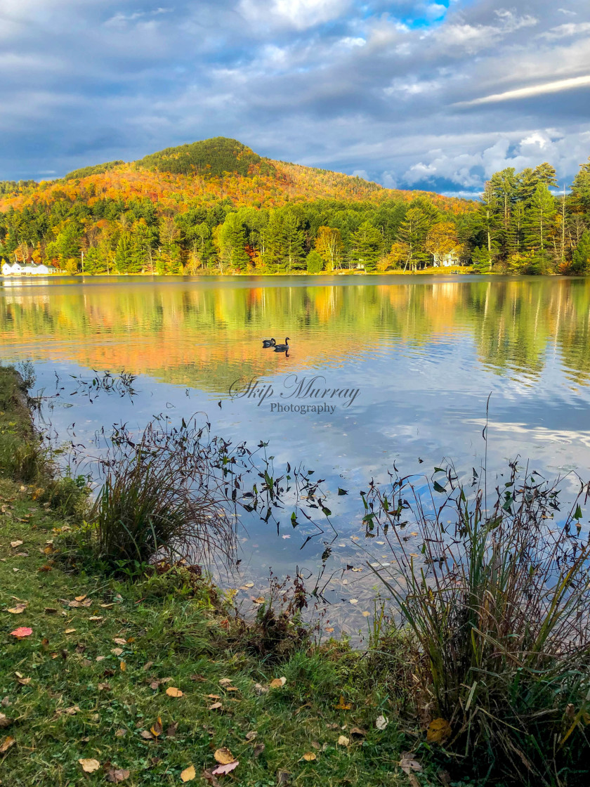 """""""Moody Pond Color"""" stock image"""