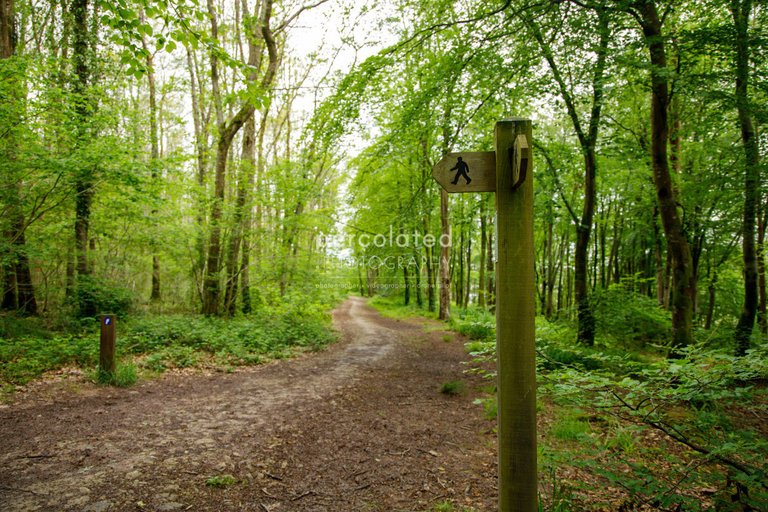 """Minwear Woods Walking Sign"" stock image"