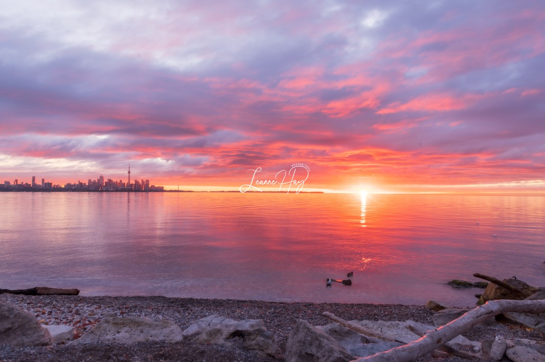 """Tropical Toronto Sunrise"" stock image"