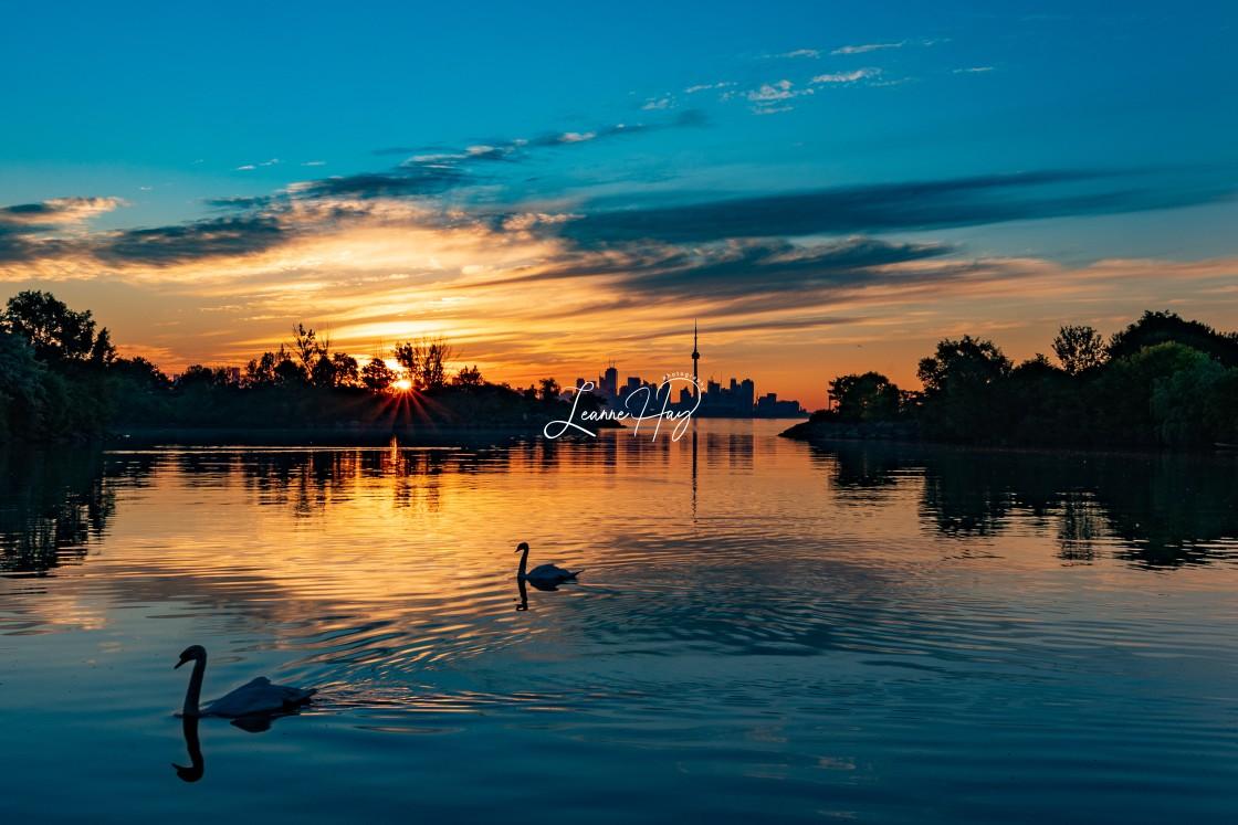 """""""Swans Enjoying a Serene Sunrise"""" stock image"""