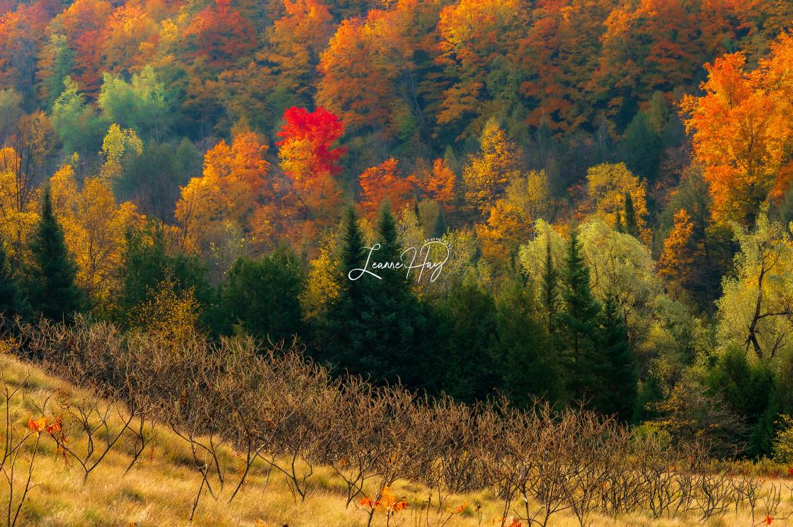 """The Magic of Autumn"" stock image"
