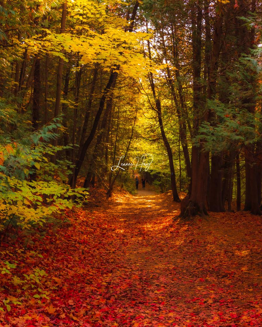 """Fall-Leaves Fall"" stock image"