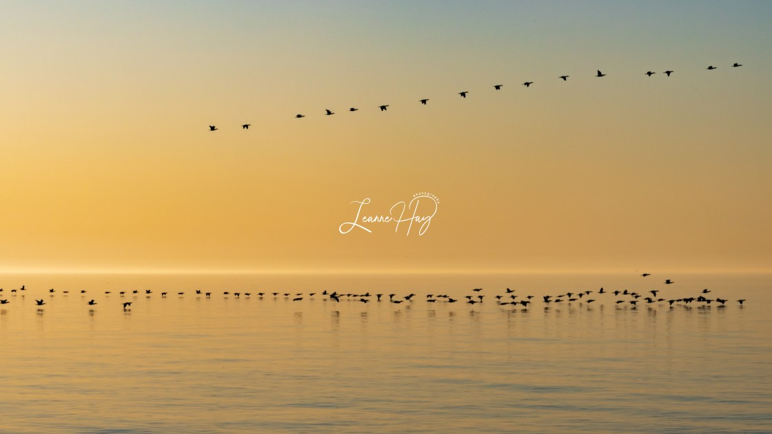 """Golden Morning Flight"" stock image"