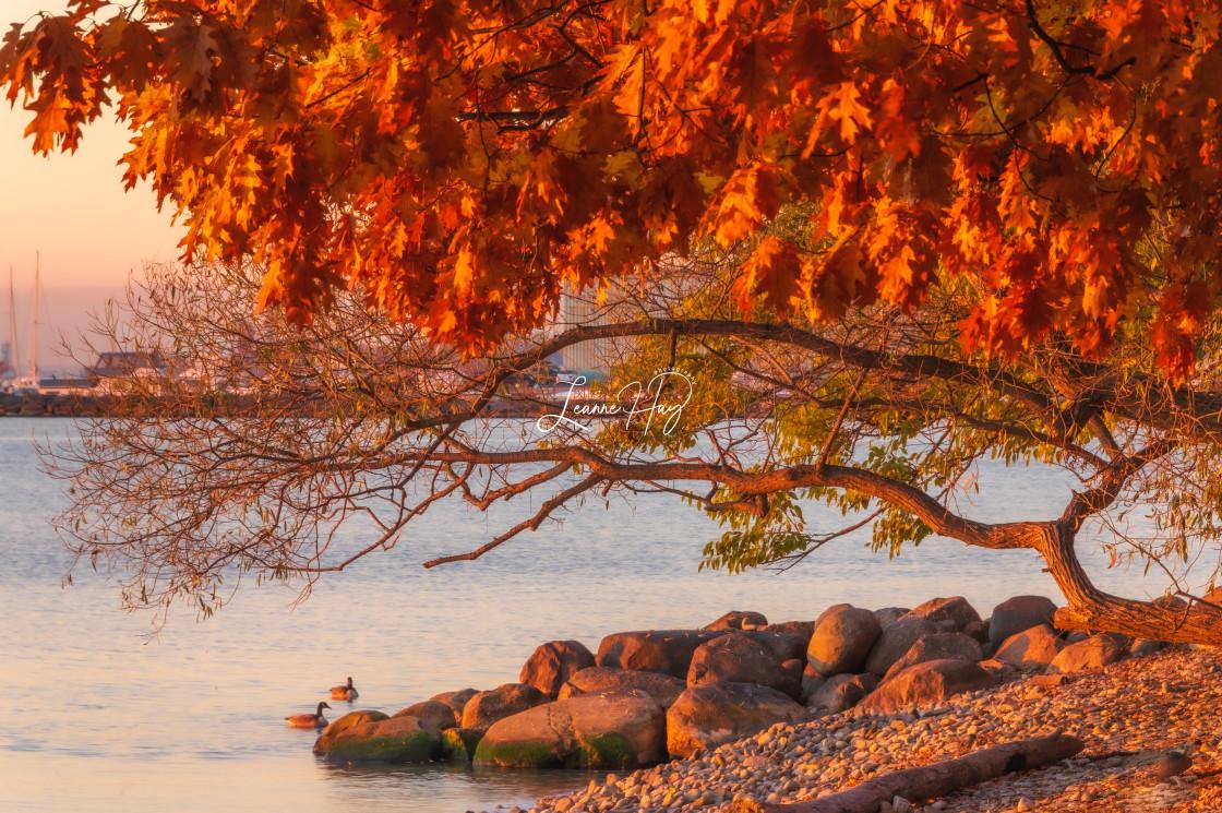 """Autumn Serenity"" stock image"