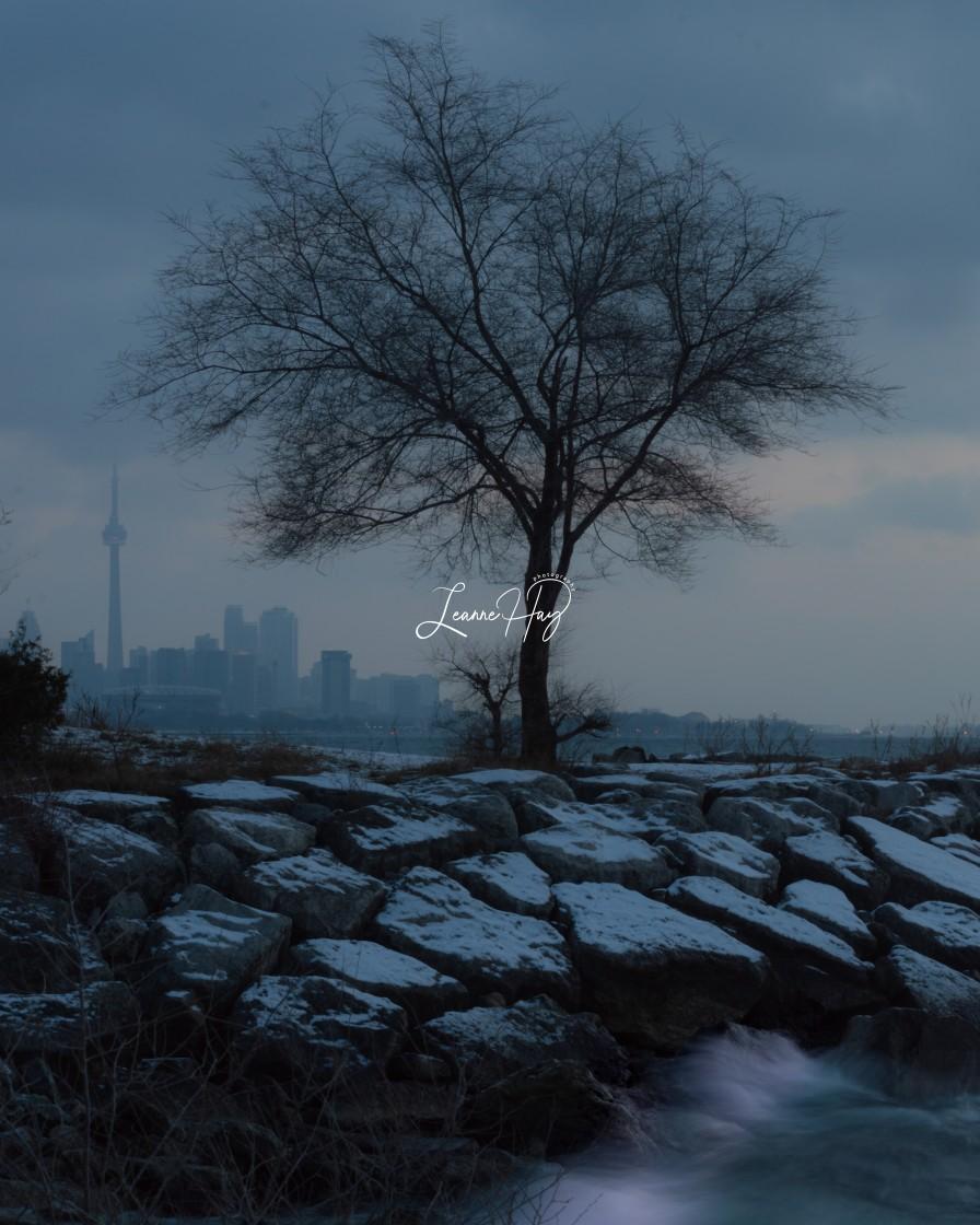"""Moody Winter Morning"" stock image"