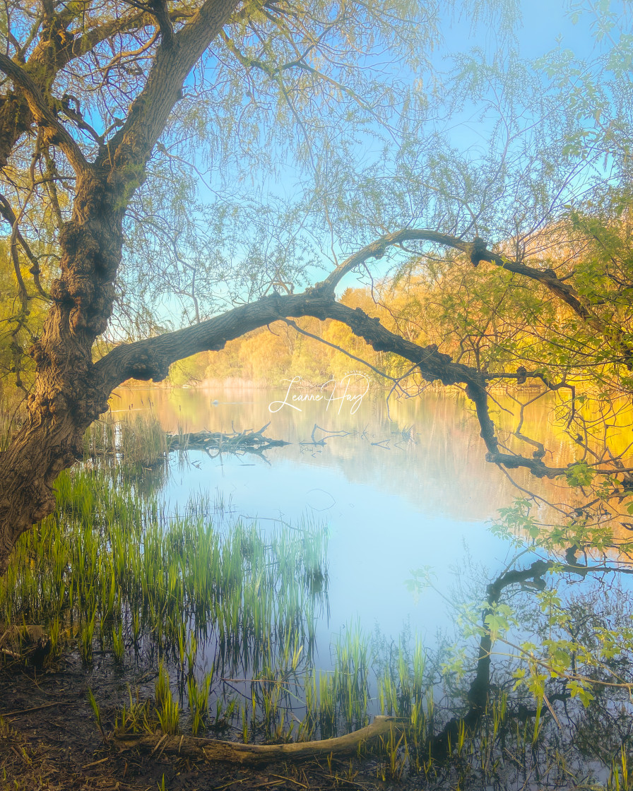 """""""Dreamy Reflections"""" stock image"""