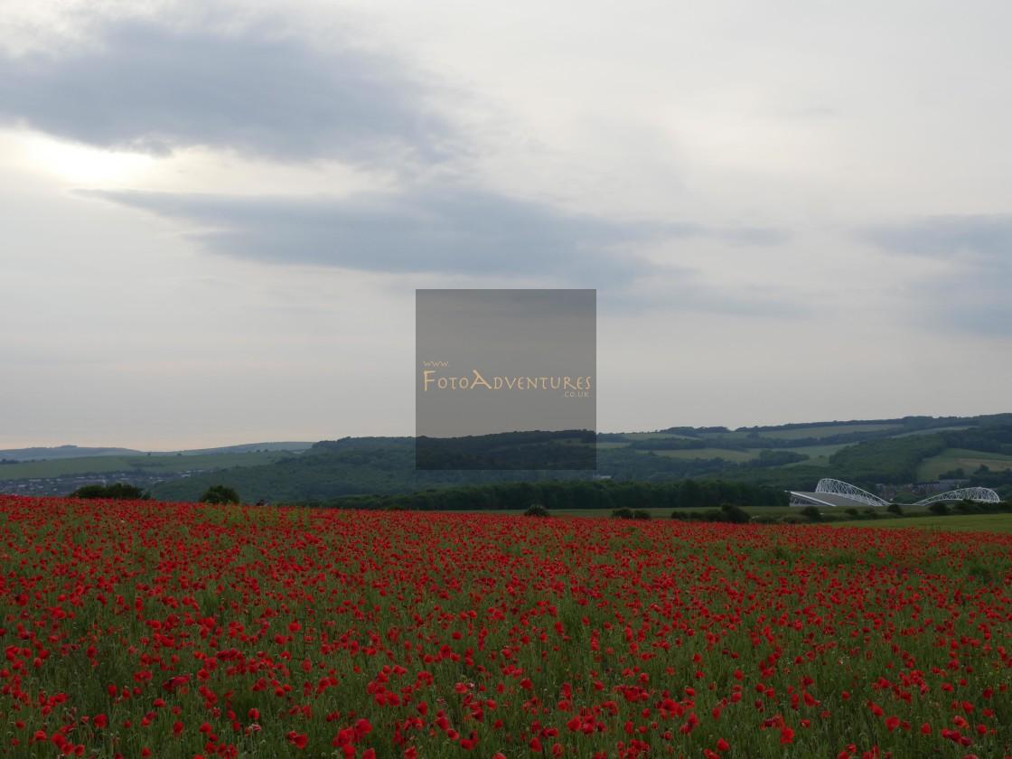 """Poppies around Amex Stadium"" stock image"