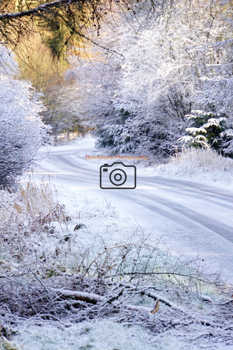 """""""Laurieston Forest in snow"""" stock image"""