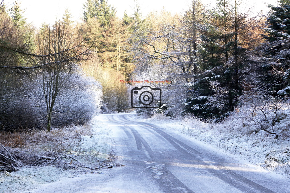 """""""Forest Road in Winter Dumfries and Galloway."""" stock image"""