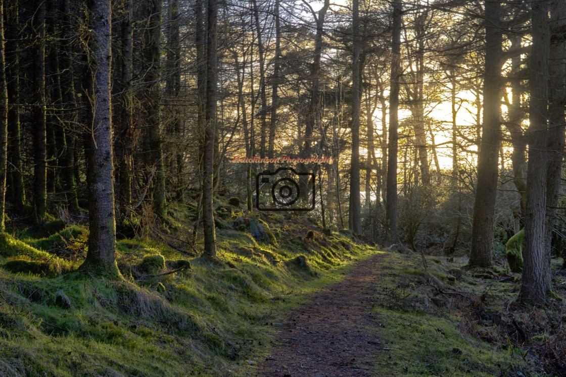 """""""Late Winter Sun & Trees, Dumfries and Galloway"""" stock image"""