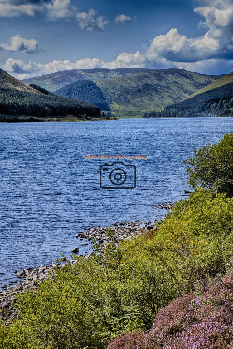 """""""St Mary's Loch"""" stock image"""