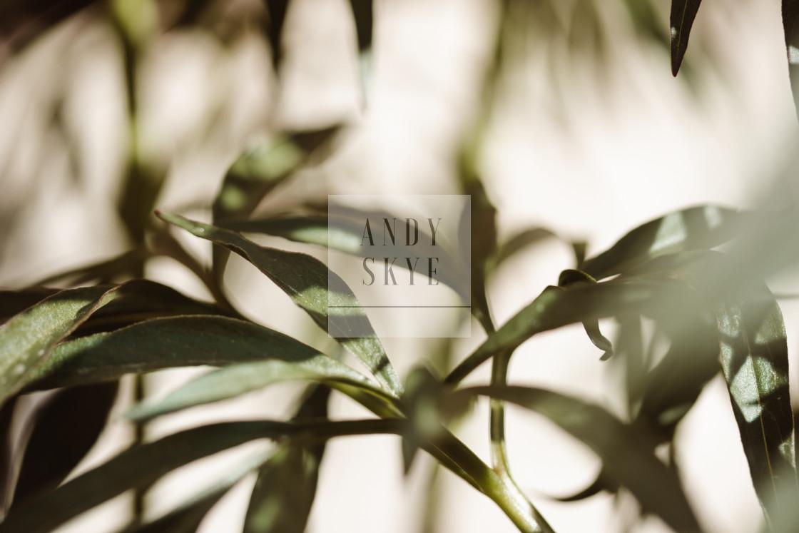 """""""peonie greens"""" stock image"""