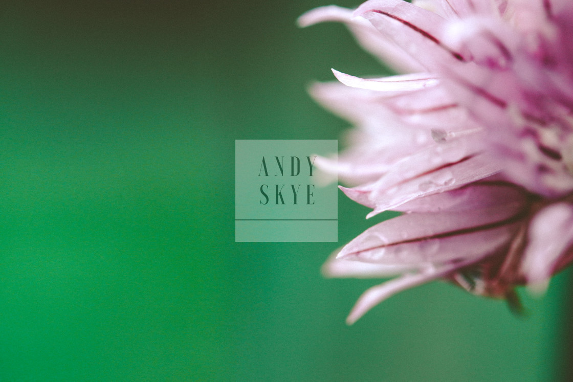 """""""chive"""" stock image"""