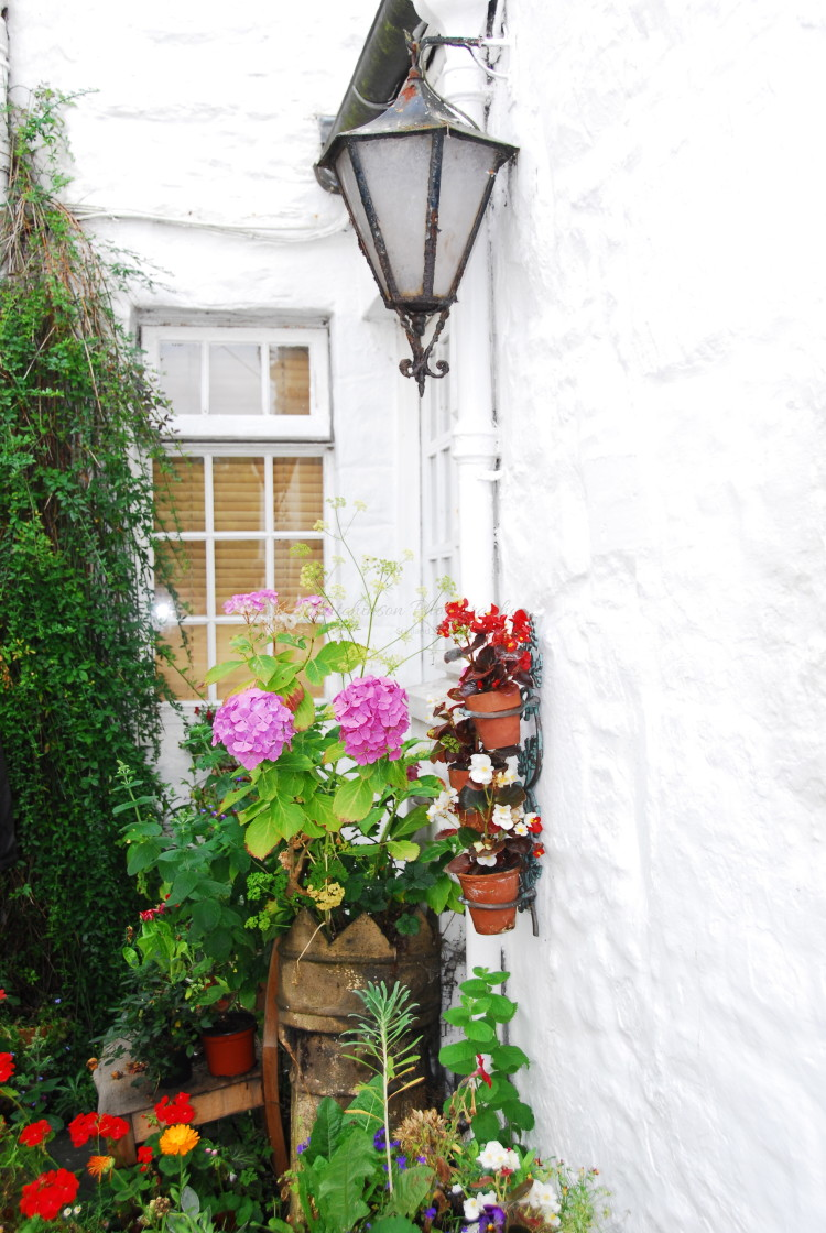 """""""Flowers and Lamp Dumfries and Galloway,"""" stock image"""