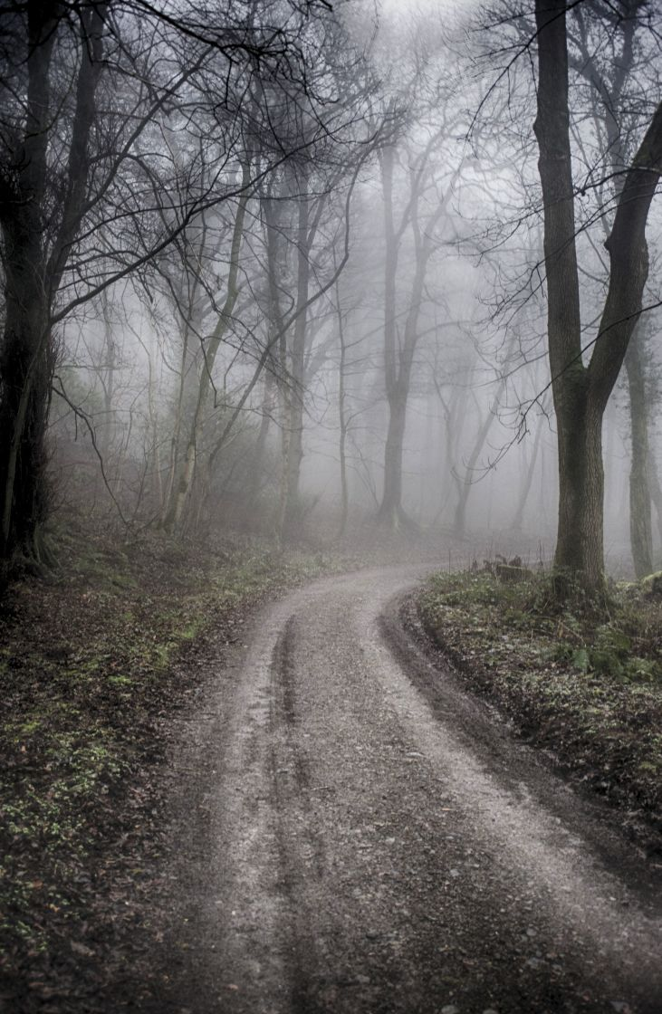 """""""Woodland Fog"""" stock image"""
