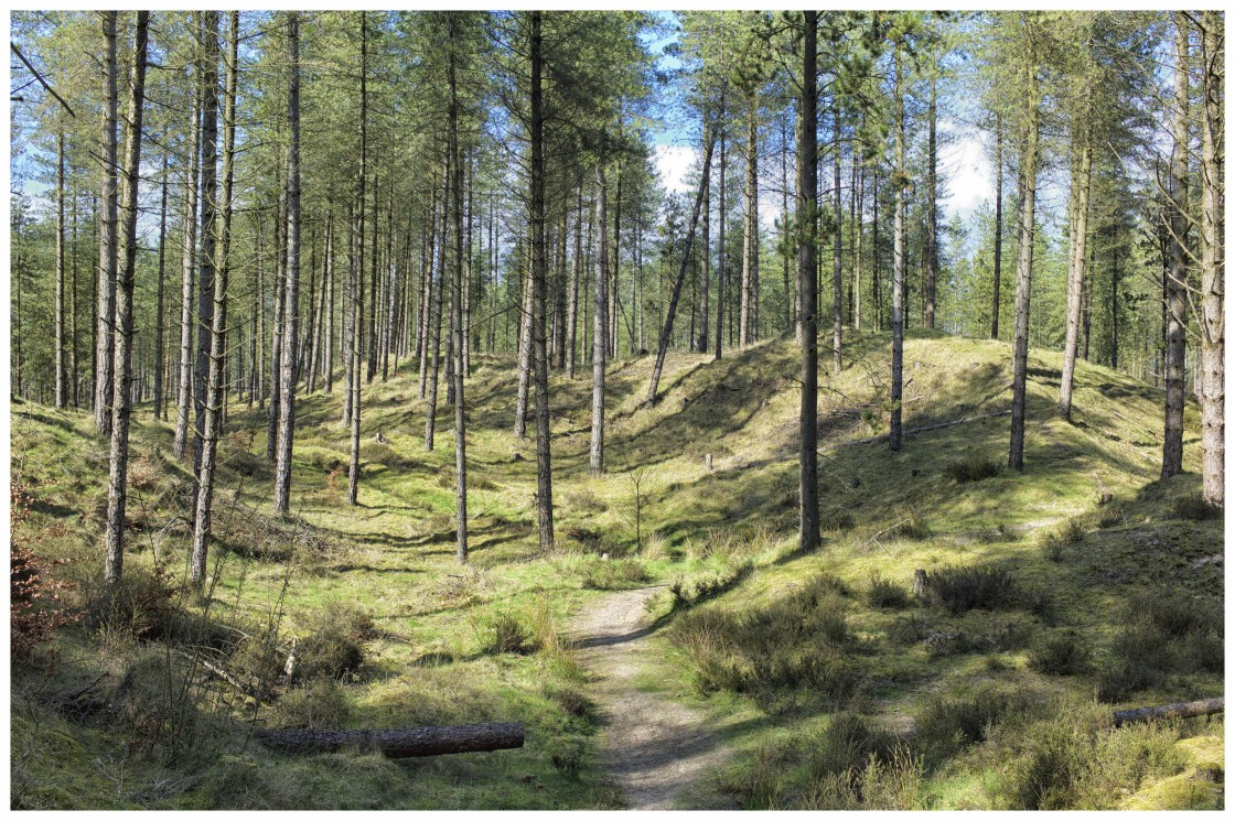 """""""Path through Torrs Warren woodland, Dumfries and Galloway"""" stock image"""