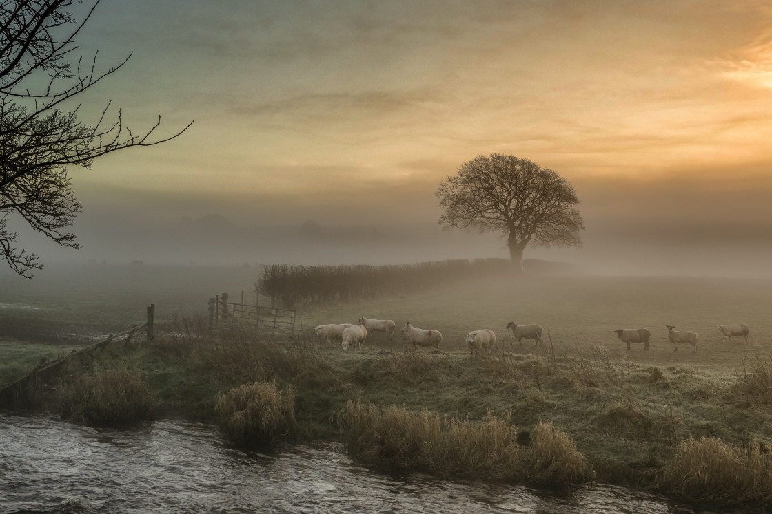 """Early morning in the Scottish countryside"" stock image"