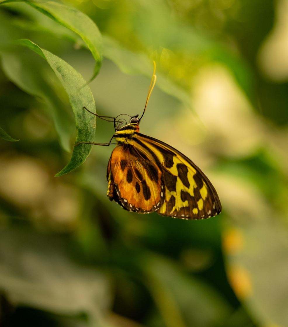 """Butterfly Sitting on Fern"" stock image"
